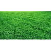 """2kg de sementes""""grama são carlos melhorada com 98% de germinação"""
