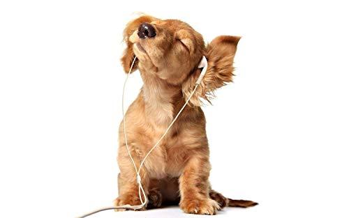 Full Square Drill Diamond Painting Cross Stitch Dog Listening Music Rhinestones Embroidery Mosaic Animals 12x20 Inch