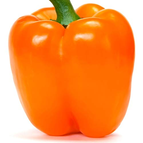 Orange Sun Bell Pepper Seeds for Planting Easy and Unique Heirloom Sweet Chili bin137 (50 Seeds)