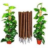 Intagro farms Coir Moss Stick/Coco Pole for Climbing Indoor/Money Plants, 3ft, 96cm (Brown-single piece)