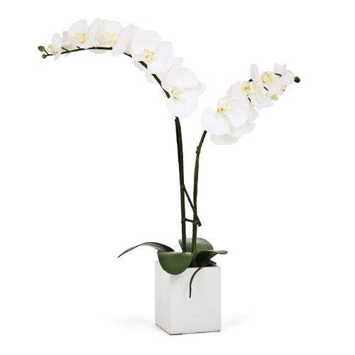 Torre & Tagus 1684-100020 Orchid Potted Double Stem, 23-Inch, White