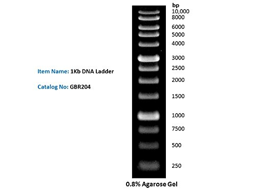 1Kb DNA Ladder DNA Marker for DNA RNA Agarose Gel Electrophoresis, 1ml/Vial, 200x loads by Green BioResearch LLC