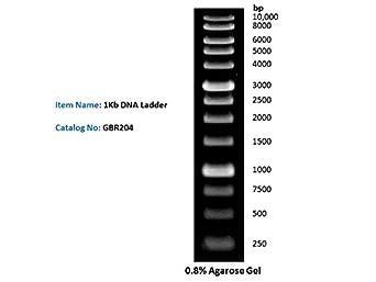 Amazon Com 1kb Dna Ladder Dna Marker For Dna Rna Agarose