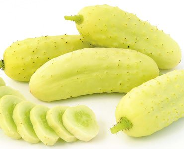 Salt and Pepper Organic Pickling Cucumber Seeds by Stonysoil Seed Company