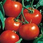 75+ Rutgers Tomato Seeds- Heirloom Variety