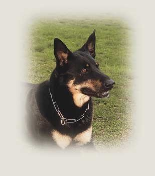 Herm Sprenger Fur Saver Heavy Dog Training Collar, 19-Inch and 3.0 Millimeter, My Pet Supplies
