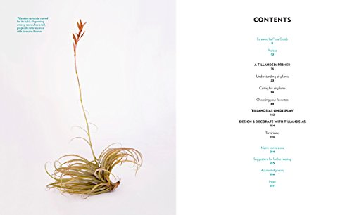 Air Plants: The Curious World of Tillandsias by Workman Publishing/Timber Press (Image #2)