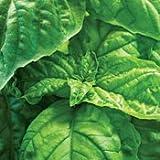 Lettuce Leaf Basil 100 Seeds -Herb - GARDEN FRESH PACK!
