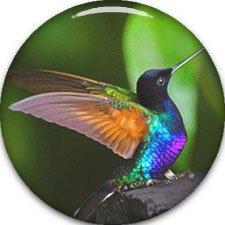 Hummingbird Golf (Hummingbird golf ball marker 3/4