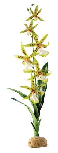 exo-terra-spider-orchid-terrarium-plant