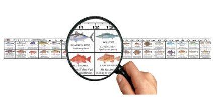 Texas Saltwater Fish Ruler Decal