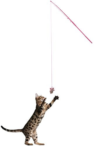 amazon com cat fishing pole amusing stick hone your cat s