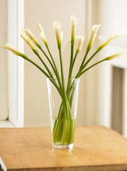 Long-Stemmed Calla Lilies by Organic Bouquet