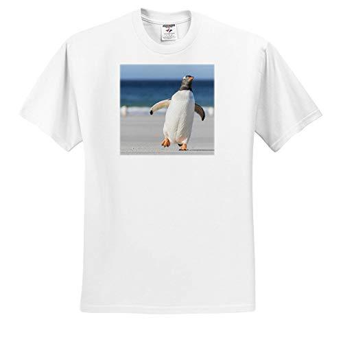 3dRose Danita Delimont - Penguins - Gentoo Penguin, Pygoscelis Papua, Falkland Islands. - White Infant Lap-Shoulder Tee (24M) (ts_314370_69) ()