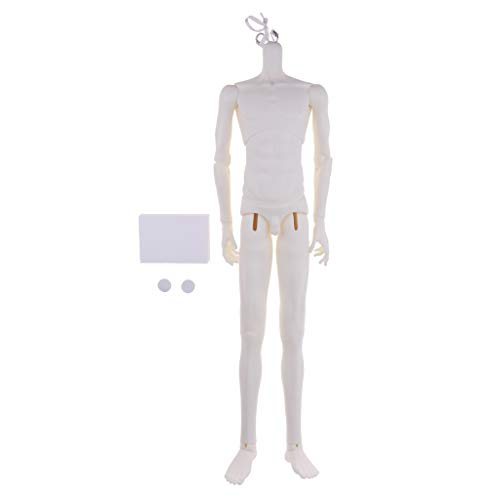 Prettyia Fashion White Skin Obvious Muscle Line Male Nude Body Action Figures Parts for 1/3 BJD DOD LUTS SSDF Dollfie