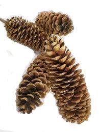 Sugarpine Pinecones 4 Pak