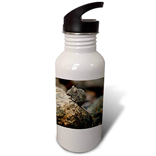 3dRose Stamp City - Animals - Close up Photograph of a Field Mouse on a Moss Covered Boulder. - Flip Straw 21oz Water Bottle (wb_304364_2)