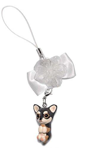 Tri Chihuahua - 3