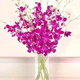 Purple Dendrobium Orchids by Giftsnideas