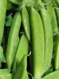 - ANVIN Germination Seeds:Pea, Oregon Sugar Pod, Snow, 155 Seeds