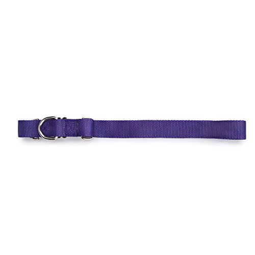 "Guardian Gear Nylon Martingale Dog Collar, Fits Necks 18"" to 26"", Ultra Violet"