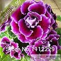 100 seeds / bag Gloxinia seeds plant flowers Plena sinningia gloxinia