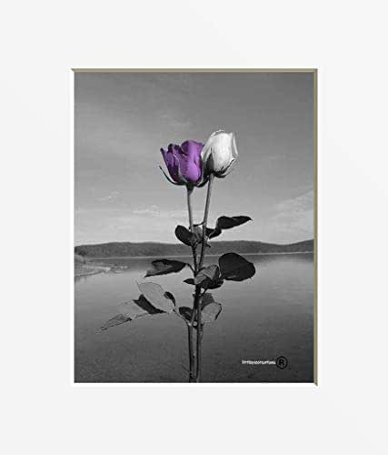 Amazon.com: Black White Purple Wall Art, Rose Flowers ...