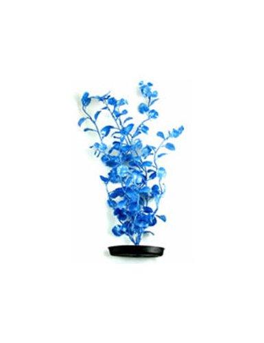 Hagen Betta Plant (Pearlscaper Cardamine Plant, 8-Inch,)