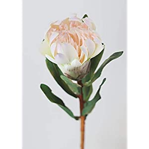 "Artificial Protea Tropical Flower in Cream Blush - 24.5"" Tall 98"