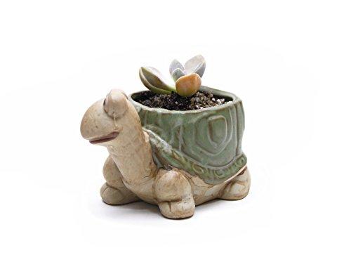 Pot Turtle (Goldblue Ceramic Home/Garden Flower Planter Pot - Outside Cute Turtle Design)