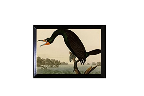 Style in Print Florida Cormorant (Audubon) Wall Plaque Sign 12