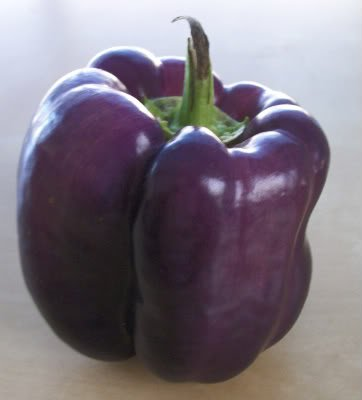 75 PURPLE BEAUTY PEPPER (Sweet Mild Bell Pepper) Capsicum Annuum Vegetable Seeds