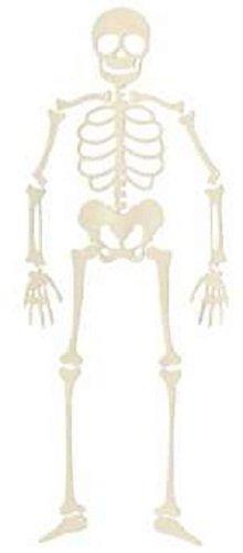 (QUICKUTZ Lifestyle Crafts 4-Inch by 4-Inch Skeleton Die)