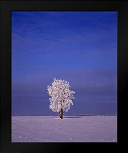 Canada, Dugald, Hoarfrost on Cottonwood Tree Framed Art Print by Grandmaison, ()