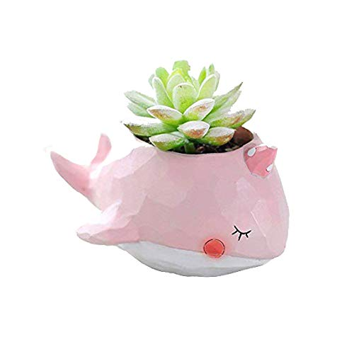 WISH HALLY WOOD Pink Whale Succulent Planter Pots for Office House Balcony Landscape Creative Decorative Flower Pots Pink Whale