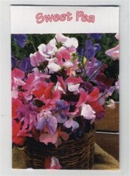Set of 7 Sweet Pea Mini Seed Packets