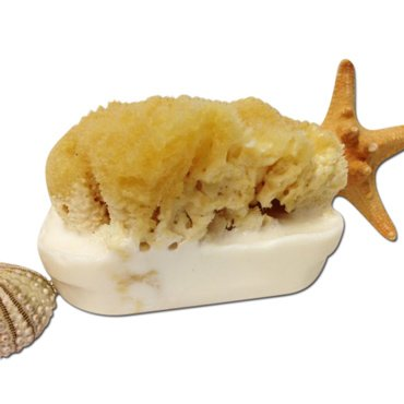 Goat's Milk and Olive Oil Soap Bar with Attached Natural Organic Sea Sponge. *Hand Crafted in Florida* *All Natural Moisturizing Soap* Great Gift! Perfect Shower Sponge! All Natural Bath Sponge and Natural Bath Bar. *The Best Sea Sponge Soap Combination* Several Amazing Scents. (Oatmeal Honey) - Goats Milk Olive Oil