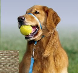 Gentle Leader Dog Trainer - 1
