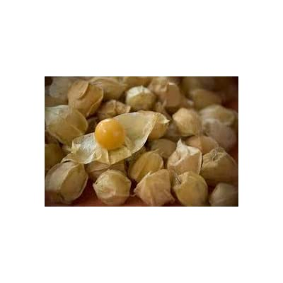 Pinky's Seed Company - Aunt Molly's Ground Cherry Seeds-100+ : Garden & Outdoor