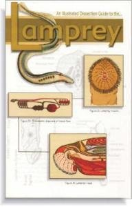 amazon com illustrated dissection guide book to lamprey industrial rh amazon com Lamprey Dissection Practice Lamprey Dissection Anatomy Labeled