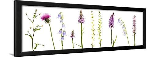 ArtEdge Meadow Flowers, Fleabane Thistle, Bearded Bellfower, Common Spotted Orchid, Twayblade, Austria Wall Art Framed Print, 12x36, Black ()