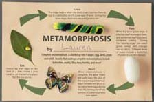 Magnificent Metamorphosis Craft Kit (makes 25 projects)