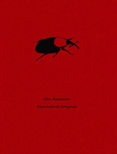 Glen Rubsamen: Rhynchophorus ferrugineus