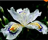 Japanese Iris Japonica Flower Seeds - 50pcs White Iris Orchid Seeds Japanese Rare Flower Easy Plant.garden Home Bonsai