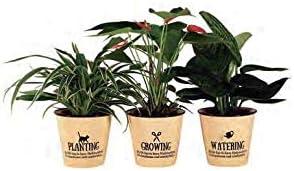 プランツネット(Plants Net) 観葉植物 リトルジャルダン K12046515 24入