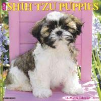 Quality 2019 JUST Shih TZU Puppies Calendar with Free Rock Music MEMOROBILIA (Key Chain, Pen,Magnet,Card ETC.) Calendar Planner,Calendar Wall,Pocket, Monthly,DO IT All,Gallery ()