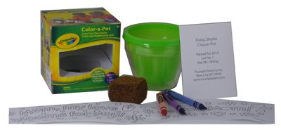 crayo-color-flwrpot-kit-pack-of-6