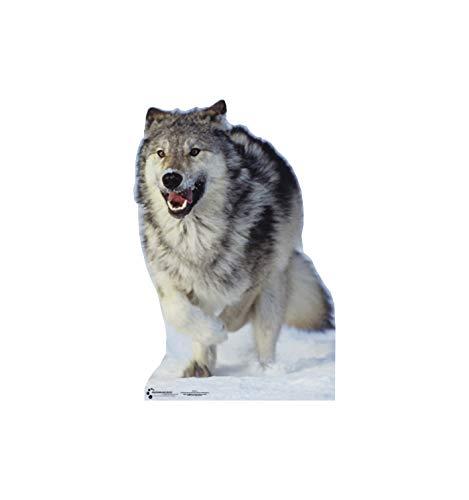 Advanced Graphics Wolf Life Size Cardboard Cutout Standup
