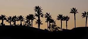 Fine Art Print–Sunset Palms II por Gango Ediciones, 19 x 8