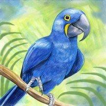 Bird Wall Art Tile - Hyacinth Macaw Bird Ceramic Wall Art Tile 4x4